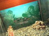 Аквариум 35л с рыбками, улитками